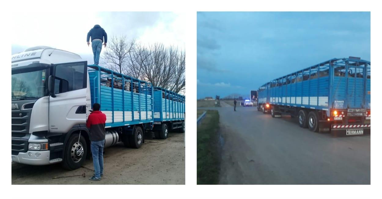 CNEL VIDAL: Secuestraron un camión con 34 caballos que iban al tacho a la pcia de Entre Rios