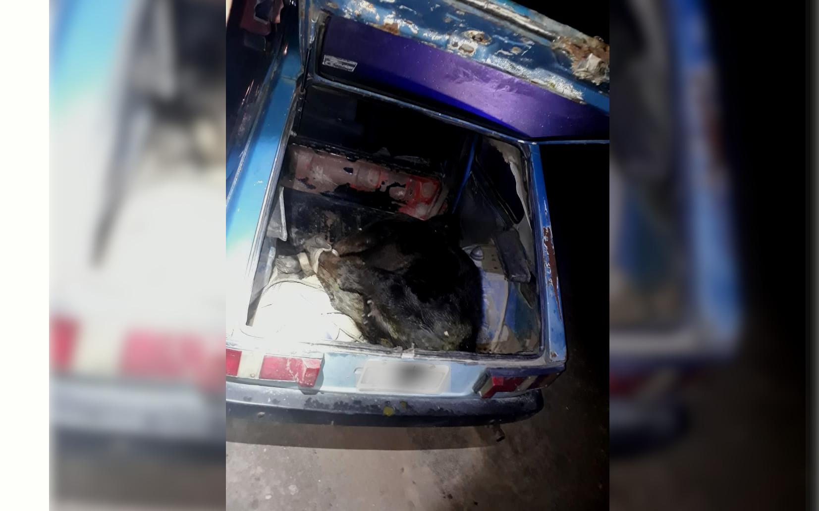 """ABIGEATO: Detienen en el camino """"El Dorado"""" a tres sujetos que llevaban un ternero a bordo de un Fiat 147"""