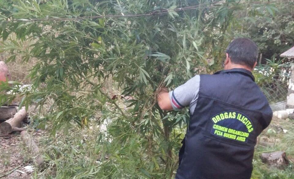 GRAL PIRAN: Después de más de un año condenaron a dos sujetos que protegían sus plantas de marihuana con un cerco eléctrico