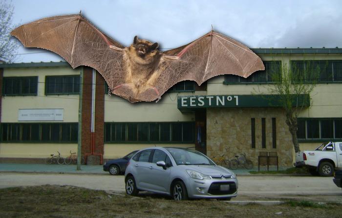 Por una invasión de murciélagos, la escuela técnica de Coronel Vidal no pudo iniciar aún el ciclo lectivo