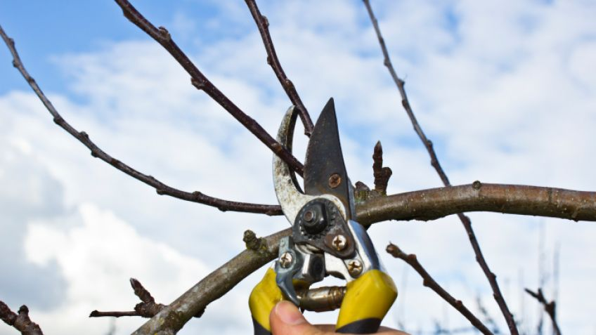MEDIO AMBENTE: Lo que tenés que saber si pensás podar o extraer un árbol