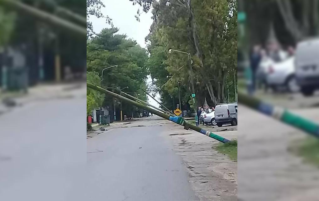 EFECTO DOMINÓ: La caída de un árbol en Mar de Cobo, hizo arrastrar varios postes de electricidad