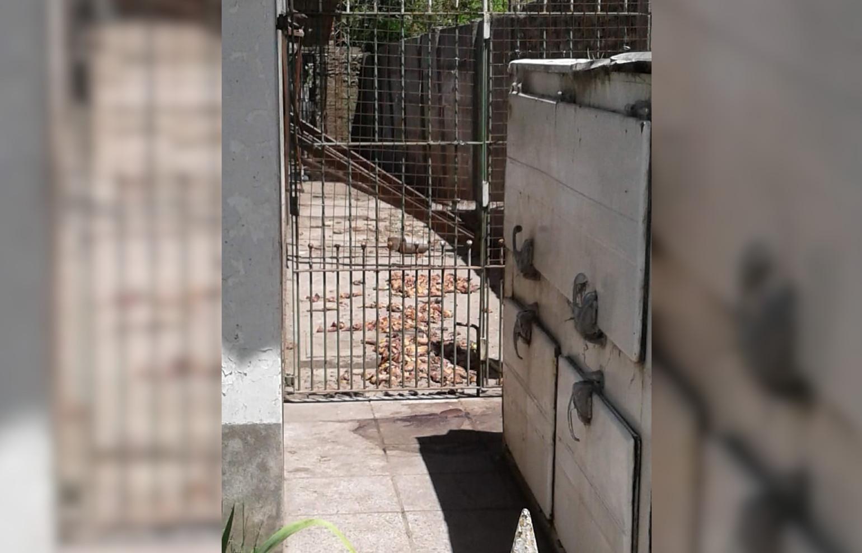 CNEL VIDAL: En la calle Rivadavia denuncian a un vecino por los olores nauseabundos de su casa