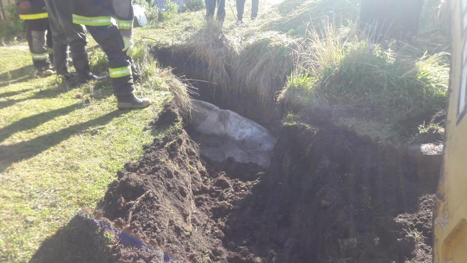 Los Bomberos de Coronel Vidal rescataron un caballo que había caído en un pozo