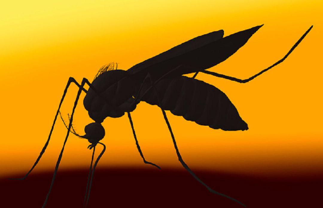 Prevén una invasión de mosquitos durante los próximos 7 a 10 días