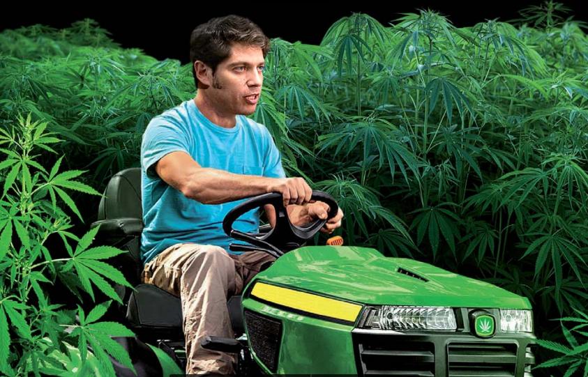 Cannabis: con el primer municipio autorizado a cultivar, Kicillof acelera la ley provincial