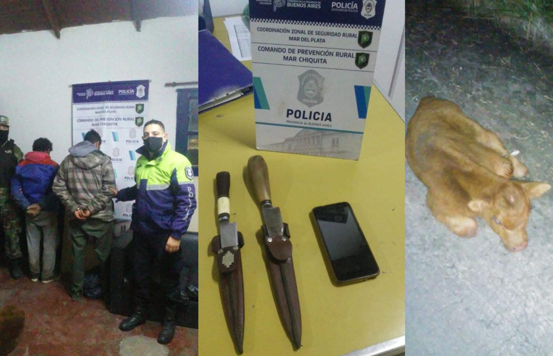 Se robaban dos terneros en un R12 y cuando los encontró la policía se dieron a la fuga arrojando a los animales en el camino